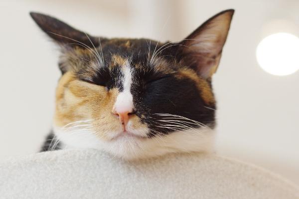 猫式の猫さん