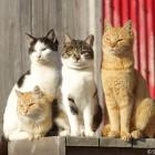 冬の青島の猫達