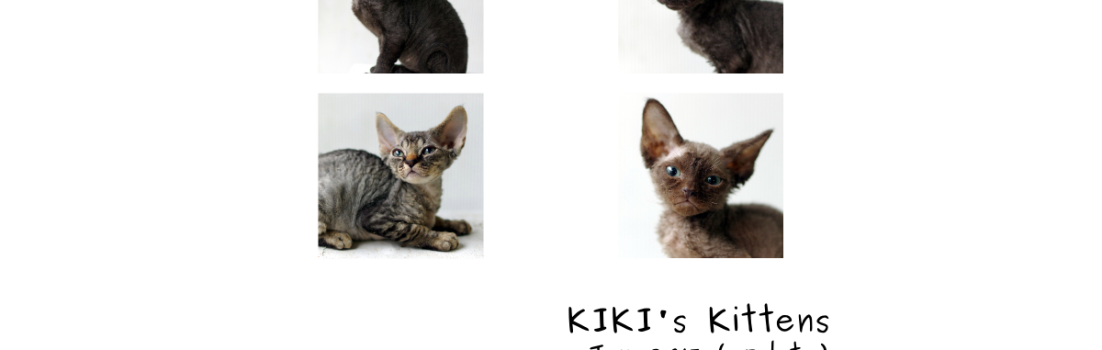 デボンレックスの仔猫 DevonRex kittens