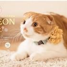 おしゃれ美猫LEON(レオン) 4月はじまりカレンダー2016