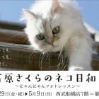 石原さくらのネコ日和