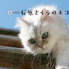 石原さくら「ネコ日和」写真展