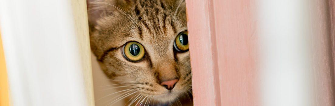 にゃにゃにゃの本~YouTuber・ワタナベマホトと猫たち~