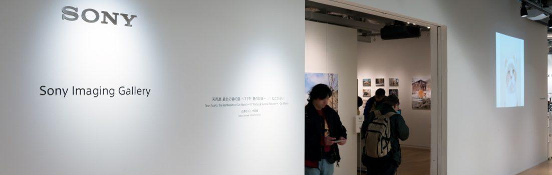 石原さくら 作品展「天売島 最北の猫の島 ~'17 冬・夏の記録~ / ねこかぶり」ソニーイメージングギャラリー会場にて
