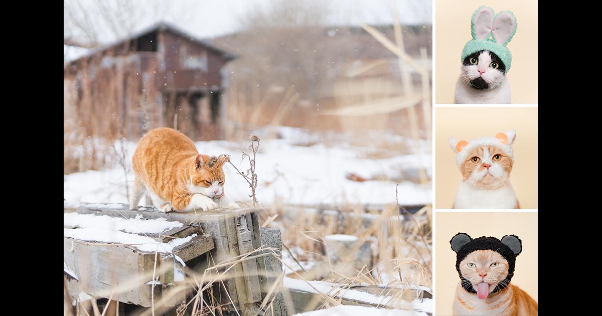 「個展「石原さくら 作品展 天売島 最北の猫の島 ~'17 冬・夏の記録~ / ねこかぶり@ソニーストア札幌」開催」の画像検索結果