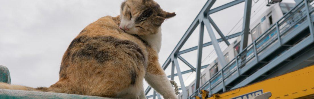 猫と鉄道写真展