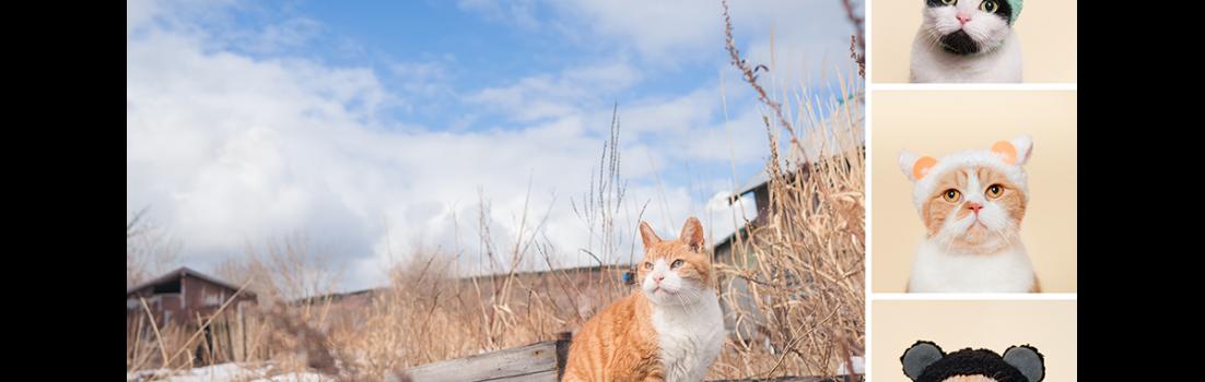 石原さくら 作品展「天売島 最北の猫の島 ~'17 冬・夏の記録~ / ねこかぶり」