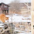 石原さくら 作品展「天売島 最北の猫の島 ~'17 冬・夏の記録~ / ねこかぶり」 @ ソニーストア 札幌